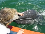Petting a baby grey whale. PIX by Debbie Thomas